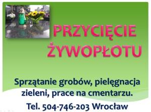 Przycięcie tuji Wroclaw